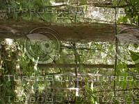 wood0811.jpg