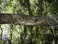wood0855.jpg