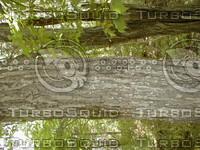 wood0866.jpg