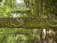 wood0867.jpg