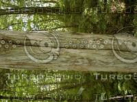 wood0869.jpg