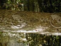wood0874.jpg