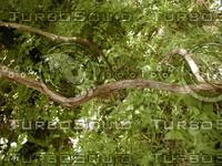 wood0875.jpg
