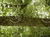 wood0877.jpg