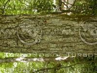 wood0878.jpg