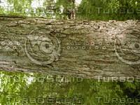 wood0879.jpg