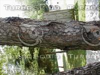 wood0913.jpg