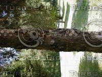 wood0915.jpg