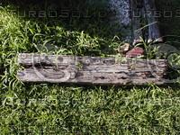 wood0926.jpg