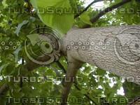 wood0939.jpg