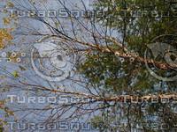 wood0981.jpg