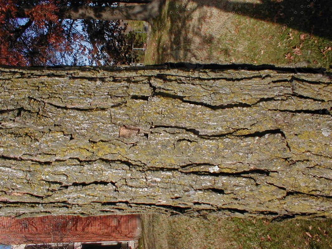 wood0986.jpg