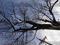 wood0990.jpg