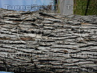 wood0991.jpg
