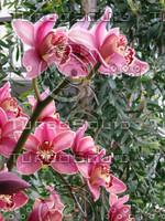 Bronze Orchids.jpg