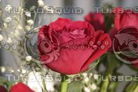 RedRose1.jpg