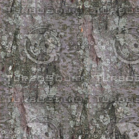 Tree-Bark-2.bmp