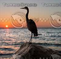 crane at sunset.psd