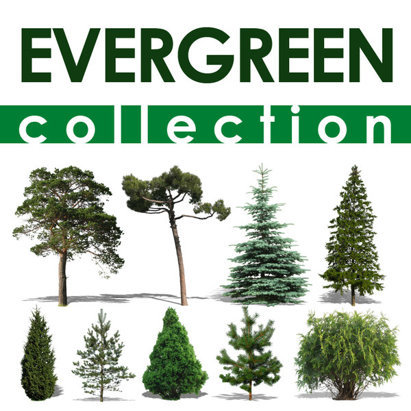 evergreen collection.jpg