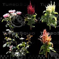 Flowers01.zip