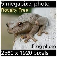 bigfrog.jpg