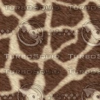 giraffe512.bmp