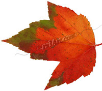 leaf_0726.png
