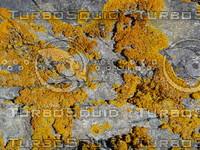 lichen01.JPG