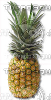 pineapple.psd
