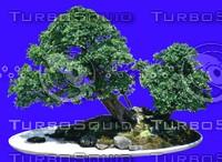 plant019.jpg