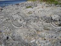 rocky_shore.JPG