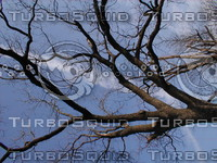 wood0006.jpg