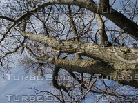 wood0131.jpg
