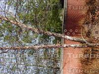 wood0144.jpg