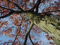 wood0147.jpg