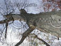 wood0150.jpg