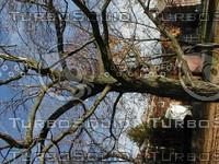 wood0161.jpg