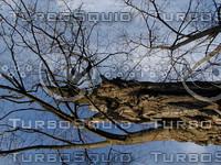 wood0165.jpg