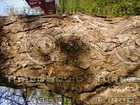 wood0176.jpg