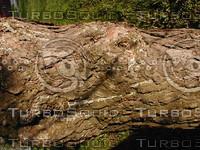 wood0177.jpg