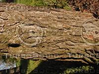 wood0179.jpg