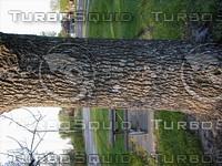 wood0207.jpg