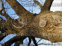 wood0214.jpg