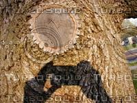 wood0215.jpg