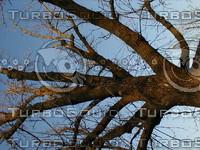 wood0217.jpg