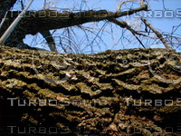 wood0222.jpg
