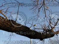 wood0224.jpg