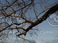 wood0233.jpg