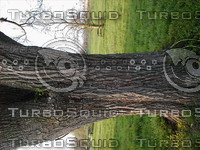 wood0244.jpg