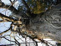 wood0259.jpg